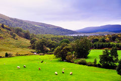 Kerry Landscape Royalty Free Stock Images