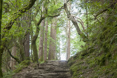Kerry Way near Torc Waterfall Stock Image