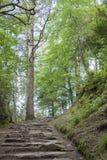 Kerry Way near Torc Waterfall. Ireland Stock Photo