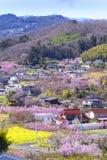 Kers-bloesem bomen & x28; Sakura& x29; en vele soorten bloemen in Hanam royalty-vrije stock afbeelding