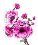 Kersenbloem in bloesem Stock Foto's
