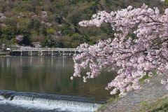 Kersenbloesem, Arashiyama in de lente, Kyoto, Japan Stock Foto