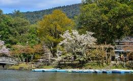 Kersenbloesem bij kleine pijler in Nara Park royalty-vrije stock afbeeldingen