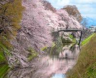 Kersenbloesem bij Yamagata-kasteel (Kajo-Park) Stock Foto