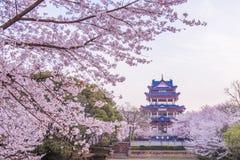 Kersenbloesem in Chinese tuin Yuantouzhu Stock Foto's