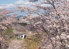 Kersenbloesem in het Park van Funaoka Joshi in Miyagi-prefectuur, Japan stock afbeeldingen