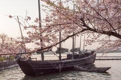 Kersenbloesem met zeilboot Royalty-vrije Stock Fotografie