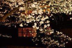 Kersenbloesem, nachtmening Kyoto Japan Royalty-vrije Stock Afbeeldingen