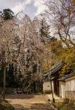 Kersenbloesem in Nara, Japan Royalty-vrije Stock Fotografie
