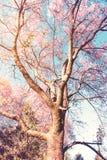 Kersenbloesem op bloeiende aard en bosscèneachtergrond Stock Afbeelding