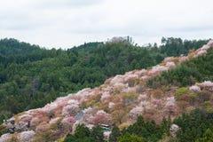 Kersenbloesem op Yoshinoyama, de lentelandschap van Nara, Japan stock afbeelding