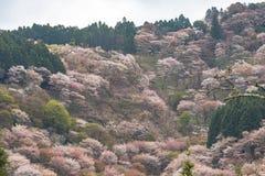 Kersenbloesem op Yoshinoyama, de lentelandschap van Nara, Japan Stock Foto