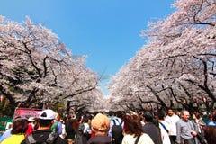 Kersenbloesem in uenopark Tokyo Japan 2015 Royalty-vrije Stock Foto