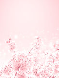 Kersenbloesems stock foto's