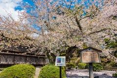 Kersenbloesems bij het Hirosaki-Kasteelpark Royalty-vrije Stock Foto's