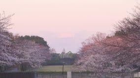 Kersenbloesems in een park en een MT Fuji in Tokyo vroeg in de ochtend stock video