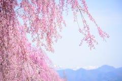 Kersenbloesems in Kitakata, Fukushima Royalty-vrije Stock Fotografie