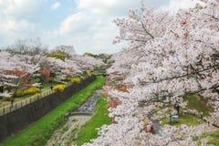 Kersenbomen langs het droge kanaal in Showa Kinen KoenShowa Memorial Park, Tachikawa, Tokyo, Japan in de lente Stock Afbeelding