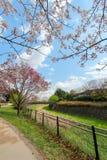 Kersenbomen langs het droge kanaal in Showa Kinen KoenShowa Memorial Park, Tachikawa, Tokyo, Japan in de lente Royalty-vrije Stock Foto