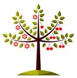 Kersenboom in twee seizoenen stock illustratie