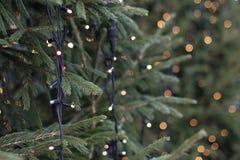 Kerstbomen Royalty-vrije Stock Foto's