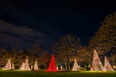 Kerstbomen bij nacht, Longwood-Tuinen, Pennsylvania. Stock Fotografie