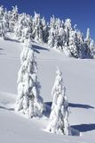 Kerstbomen in de sneeuw royalty-vrije stock afbeelding