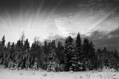 Kerstbomen en cloudscape royalty-vrije stock afbeelding