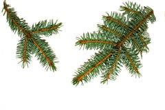 Kerstbomen groene takken met naalden Stock Foto