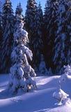 Kerstboom. Stock Afbeeldingen
