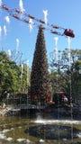 Kerstboom bij het bosje Royalty-vrije Stock Foto's