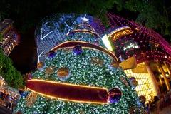 Kerstboom in boomgaardweg Stock Fotografie