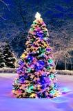 Kerstboom buiten Stock Foto's