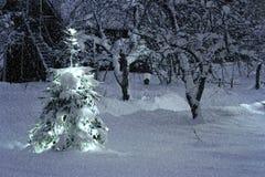 Kerstboom buiten in sneeuwtuin stock foto's