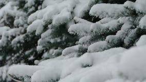 Kerstboom in de Sneeuw stock footage