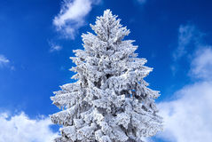 Kerstboom die in sneeuw wordt behandeld Royalty-vrije Stock Foto