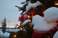Kerstboom en lichten, sparren en sneeuw Royalty-vrije Stock Foto