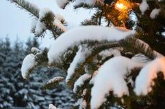 Kerstboom en lichten, sparren en sneeuw Stock Foto's