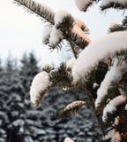 Kerstboom en lichten, sparren en sneeuw Stock Afbeeldingen
