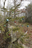 Kerstboom in het bos Stock Afbeeldingen