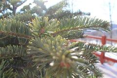 Kerstboom in het licht van de Warme Zon Kerstmishaarlok royalty-vrije stock afbeelding