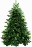 Kerstboom met het knippen van weg Stock Afbeelding