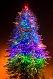 Kerstboom op de nacht Royalty-vrije Stock Fotografie