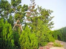 Kerstboom op de parkachtergrond Stock Afbeelding