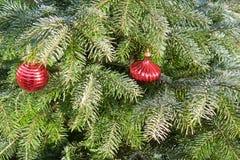 Kerstboom op sneeuw Royalty-vrije Stock Fotografie