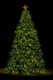 Kerstboom in Park 1 Royalty-vrije Stock Afbeeldingen