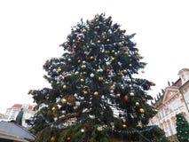Kerstboom, Praag stock afbeeldingen