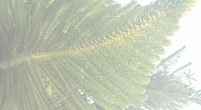 Kerstboom saai geweven malplaatje als achtergrond, abstract het malplaatjeontwerp van de informatiegrafiek stock foto's