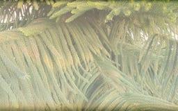 Kerstboom saai geweven malplaatje als achtergrond, abstract het malplaatjeontwerp van de informatiegrafiek stock afbeeldingen