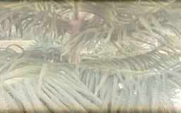 Kerstboom saai geweven malplaatje als achtergrond, abstract het malplaatjeontwerp van de informatiegrafiek royalty-vrije stock afbeeldingen